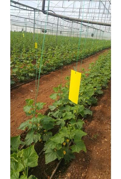 Biogreen 10 x 25 Sarı Kart Tuzak