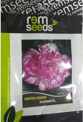 Rem Seeds Karanfil Çiçek Tohumu 5 Dianthus Chabaud 50'li