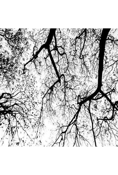 Henge Beyaz Arka Plan Üzerinde Ağaçların Soyut Siluet. Duşperdesi