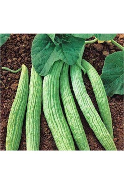 Rem Seeds Acur Tohumu Kerem Beyaz 10 gr 200'lü