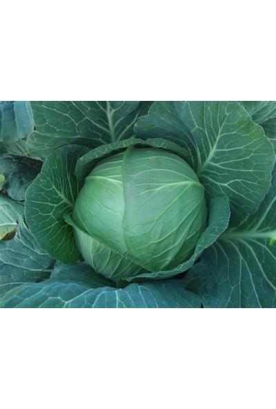 Rem Seeds Lahana Tohumu Yalova 1 Beyaz 25 gr 5000'li