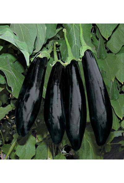 Rem Seeds Patlıcan Tohumu Aydın Siyahı 55 5 gr 1000'li