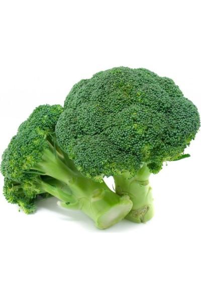 Euro Brokoli Tohumu Monet 0 35 gr 105'li