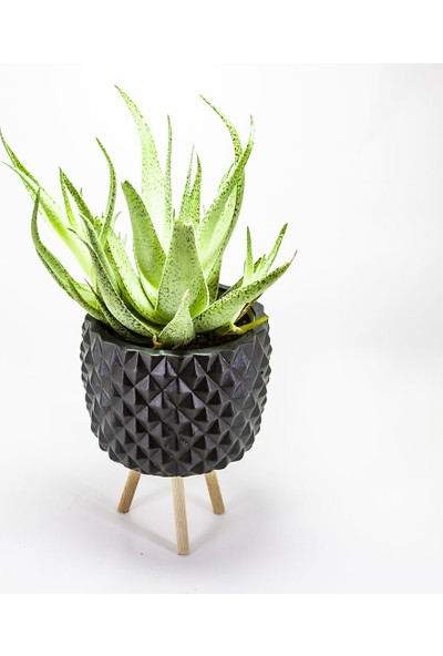 Dekormatik Geometrik Siyah Tek Sukulent Tasarım