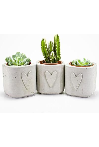 Dekormatik Love Sukulent Üçlü Tasarım