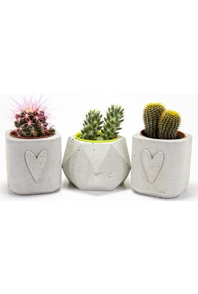 Dekormatik Perla Sukulent Üçlü Tasarım