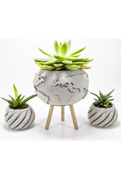 Dekormatik World Sukulent Tasarım