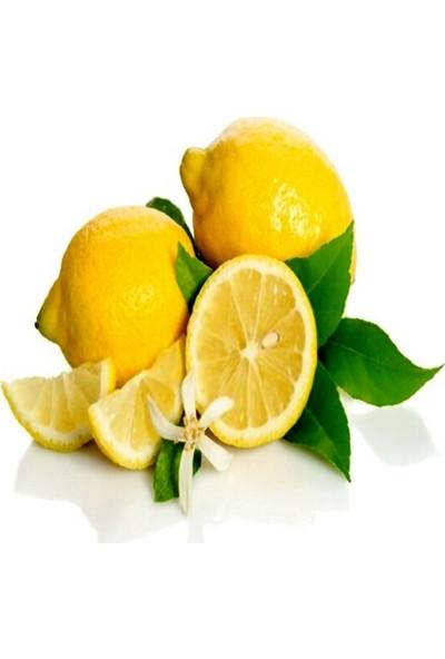Anamur Naturel Tüplü Aşılı Yarı Bodur Özel Çeşit Kütdiken Limon Fidanı