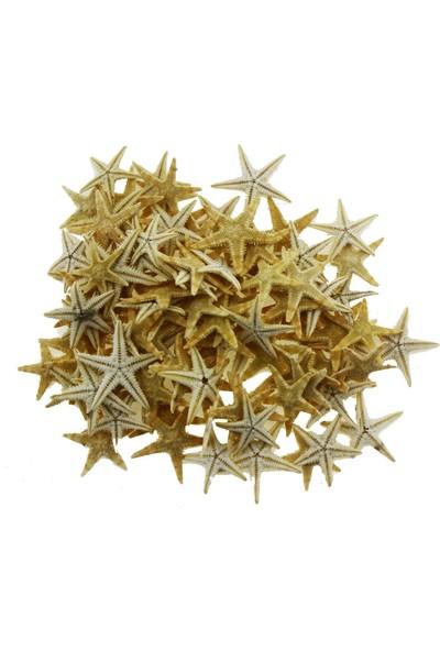 Mutlu Adım 50'li 1-1,5 cm Doğal Deniz Yıldızı