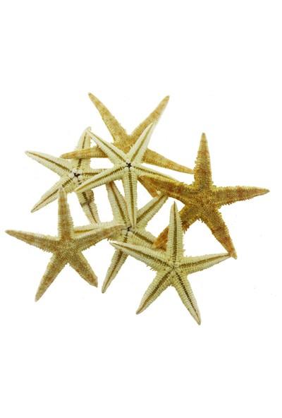 Mutlu Adım 12'li 5,5 - 6 cm Doğal Deniz Yıldızı