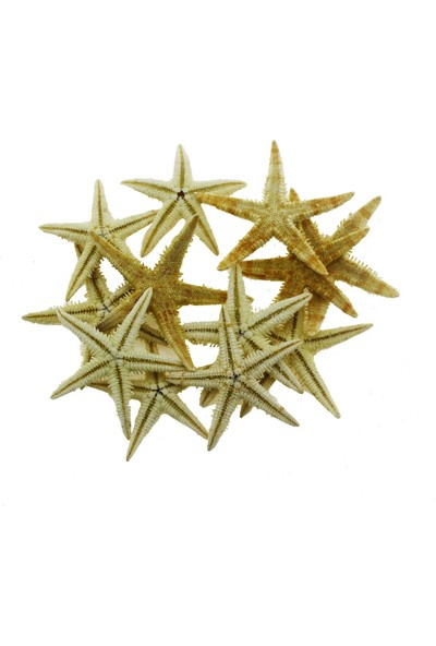 Mutlu Adım 12'li 3 - 4,5 cm Doğal Deniz Yıldızı