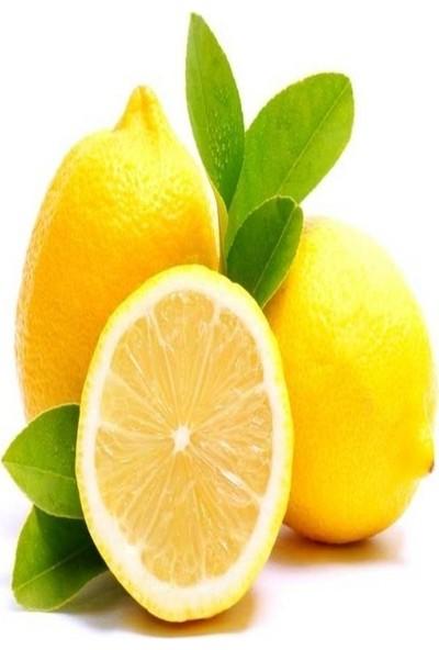 Mutlu Paket Tüplü Aşılı İnce Kabuklu Enter Limon Fidanı