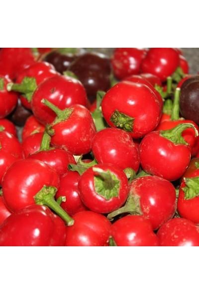 Mutlu Paket Doğal Red Cherry Hot Acı Biber Tohumu 20'li