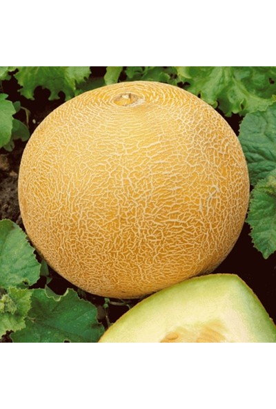 Mutlu Paket Kokulu Lezzetli Ananas Kavun Tohumu 500 gr
