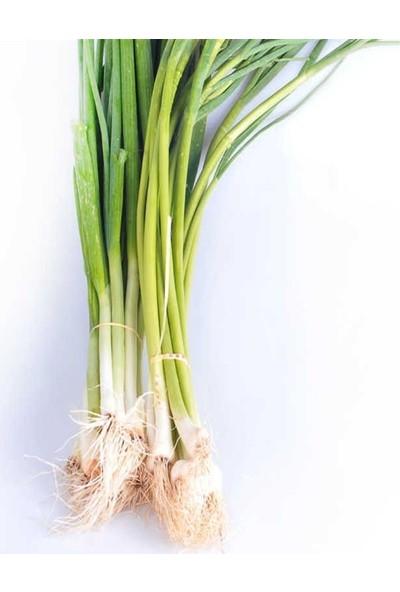 Mutlu Paket Taze Yeşil Soğan Tohumu 1 gr
