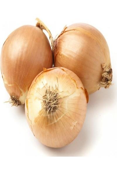 Mutlu Paket Uzun Gün Valencia Soğan Tohumu 10 gr