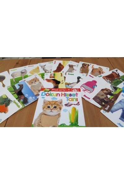 Circle Toys Dokun Hisset Tanı Kartları