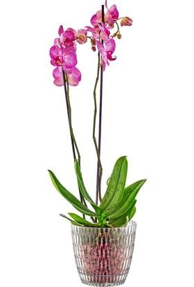 Şenyayla 5439 1,5 Lt. Şeffaf Brezza Orkide Saksı No 2