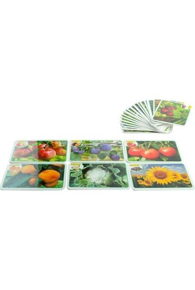 Mofy Baby Eğitici İngilizce Destekli İlk 50 Meyve ve Sebze Flash Kartları
