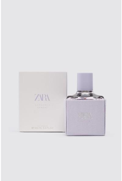 Zara Gardenia Sunset EDP 100 ml (3.4 Fl. Oz).