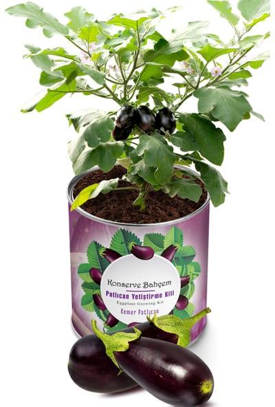 Butik Hediyelik Evde Kemer Patlıcanı Yetiştirme Kiti
