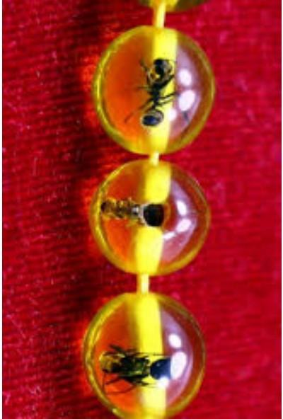 Erdem Saat Takı Karınca Fosilli Toz Kehribar Tesbih