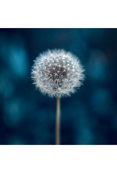 Clementoni - 250 Parça Frame Me Up Yetişkin Puzzle - Make a Wish