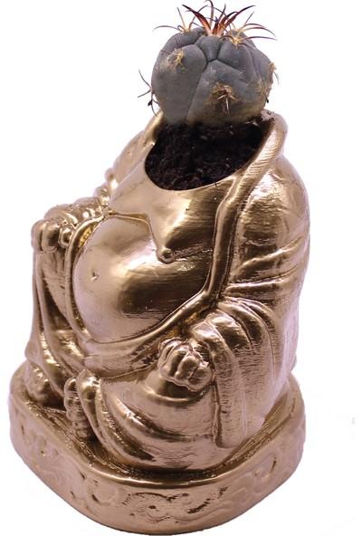Propixel Buddha Kaktüs Sukulent Saksı