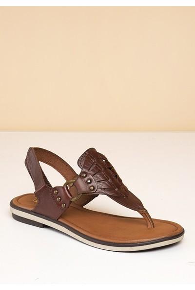 Pierre Cardin Kadın Sandalet Pc-2500-1714278 04-Kahve