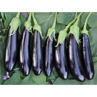 Tohhum Kemer Patlıcan 50 Tohum [Tohhum Ev Bahçe]