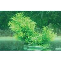 Langhu Plastik Bitki 15-20 Cm