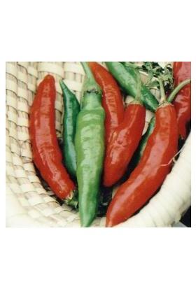 Tohhum Myanmar Biberi* (Wiang Ping Pepper) [Tohhum Ev Bahçe]