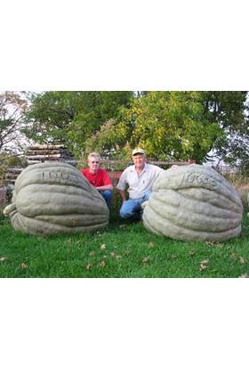 Tohhum Amerikan Dev Kabak 10 Tohum [Tohhum Ev Bahçe]