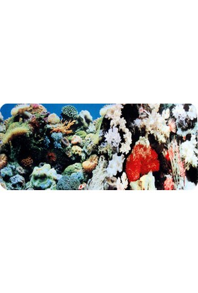 Chicos Akvaryum İçin Dekoratif Anemon-Mercan Plastik Poster 30 Cm