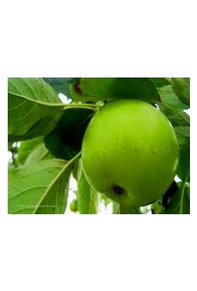 Herco yeşil Elma Gıda Aroması 40 Gr