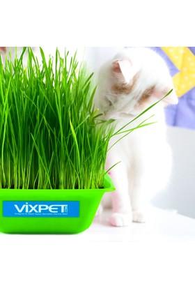 Vixpet Kedi Çimi Doğal Ve Yumuşak 20 x 20 Cm