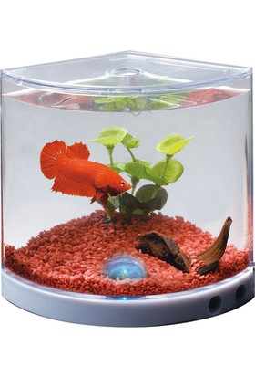 Wildlebend Dophin Mini Betta Tank Betalık