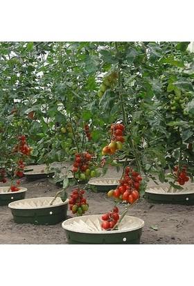 Groasis Waterboxx Bitki Yetiştirme Sulama Kutusu 10'lu Paket