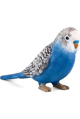 Animal Planet Muhabbet Kuşu Mavi - Small