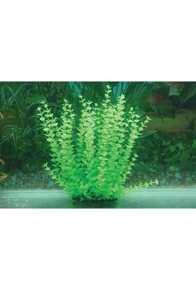 Langhu Plastik Bitki 27-30 Cm