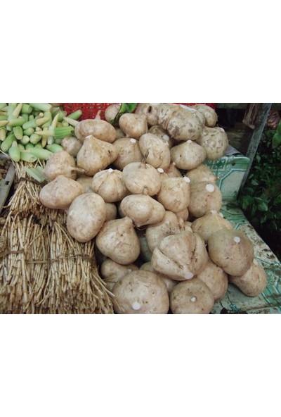 Tohhum Tatlı Patates Tohumu (Yam Bean) [Tohhum Ev Bahçe]
