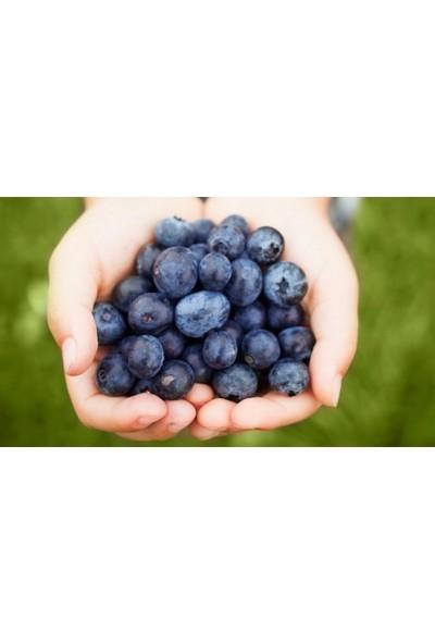 Tohhum Blueberry Yaban Mersini [Tohhum Ev Bahçe]