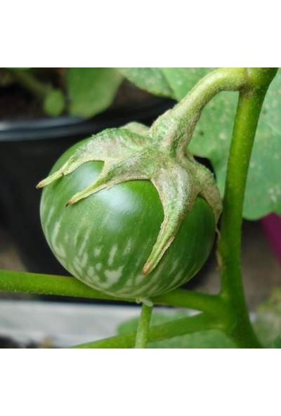 Tohhum Dolmalık Mini Patlıcan Tohumu [Tohhum Ev Bahçe]