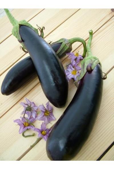 Tohhum Pala Patlıcan Tohumu [Tohhum Ev Bahçe]