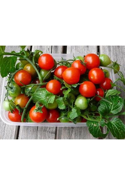 Tohhum Tiny Tim Cherry Domates Saksı + Toprak Seti [Tohhum Ev Bahçe]