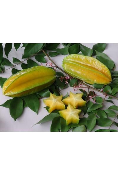 Tohhum Yıldız Meyvesi (Starfruit) Carambola Tohumu [Tohhum Ev Bahçe]