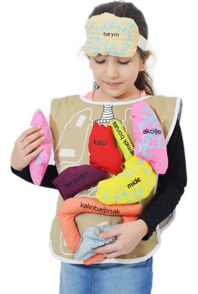 Dilteks Organlar Eğitici Önlük