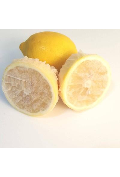Wildlebend Limon Bonesi / 50 Adet / Bitki Çayı Bonesi