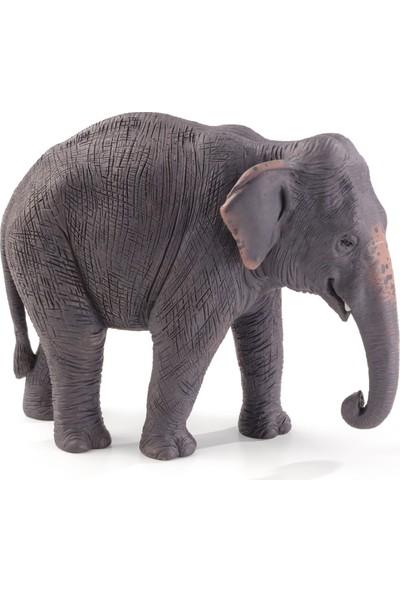 Animal Planet Asya Fili - XL