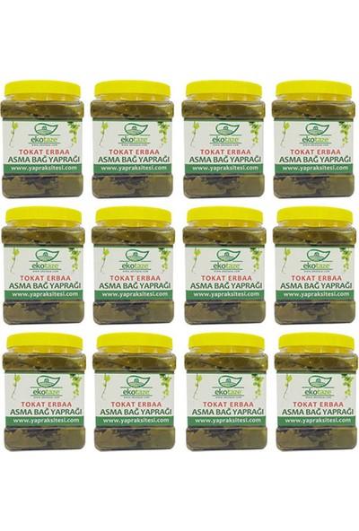 Ekotaze Tokat Erbaa Asma Bağ Yaprağı Toptan Satış 12 Kg